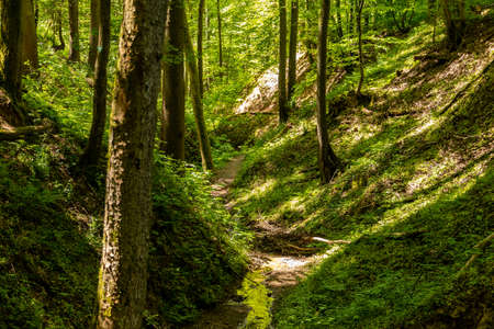 Hiking trail though the Palatinate forest nearby Pirmasens, Germany Stok Fotoğraf