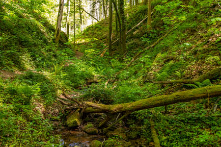 Small stream in the canyon Hexemklamm, Palatinate forest nearby Pirmasens, Germany