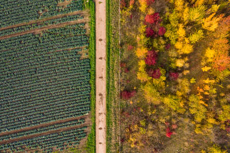 Colorful picture of green and blue cabbage next to an autumnal deciduous forest taken from the air