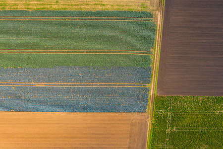 Striking tractor tracks in a green and a blue field in Germany photographed from a birds eye view