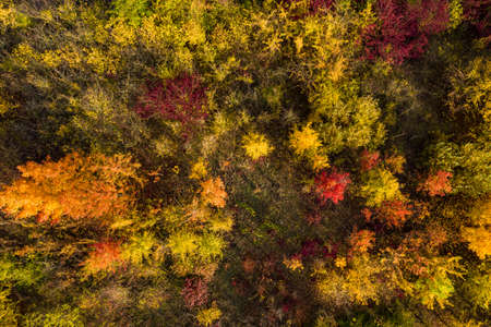 Aerial photo of individual yellow, orange and red deciduous trees in a mixed forest in Germany Standard-Bild