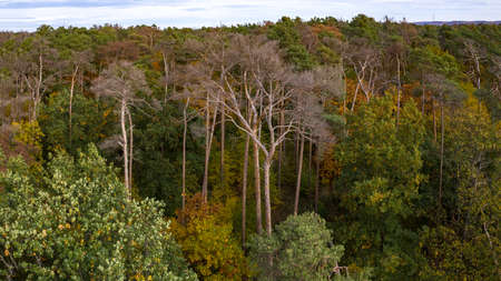 Bird's eye view of an autumnal and partly dead spruce forest in the heart of Germany