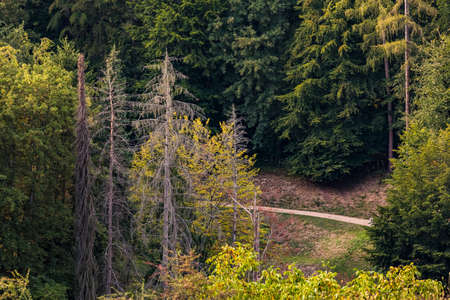 Drone image of individual sick and dead spruce trees in a green mixed forest in Germany