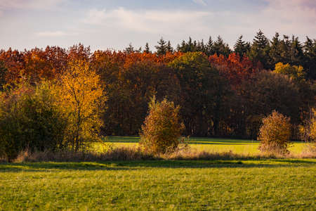 A lonely forest with many colored leaves on the ground in an autumn mood in Germany Standard-Bild