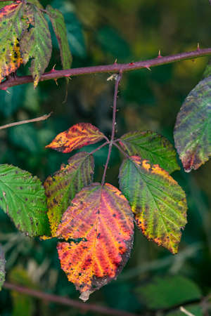 Colorful image of an autumn leaf with distinctive colors and shapes