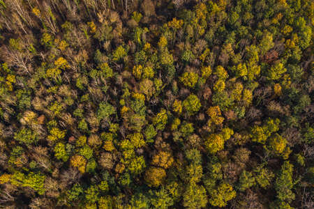 Aerial view of the partially sick German mixed forest in autumn after a drought Standard-Bild