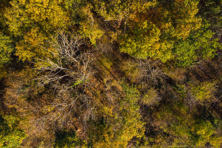Aerial view of green, yellow and orange deciduous trees in a mixed forest in Germany