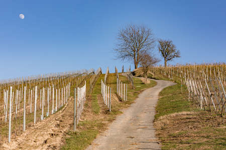 A vineyard with a steep path in the south of Germany is ideal for hiking in the sunshine in winter