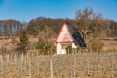 A neat little house in the vineyard on a sunny day