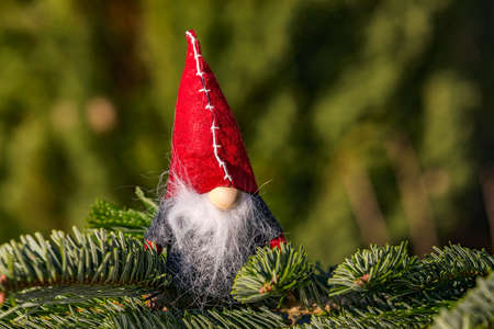 A classic pixie for Christmas with a red hat isolated against a natural green background Standard-Bild