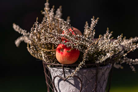 Ornate container with an apple in a bucket in close-up Standard-Bild