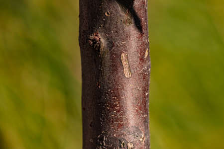 A young trunk with a red-brown bark
