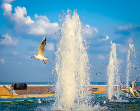 Seagull flying off from the water fountain after quenching its thirst, while other seagulls are playing in the water. From Muscat, Oman. 版權商用圖片