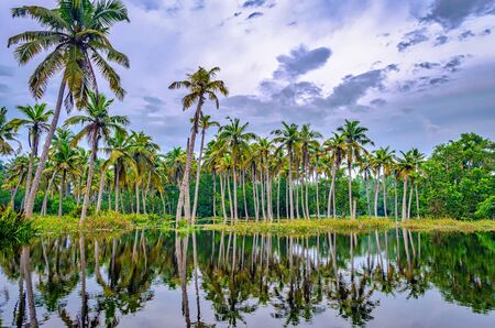 Coconut trees in the backwaters of Kerala, India with its reflection in the water. 免版税图像