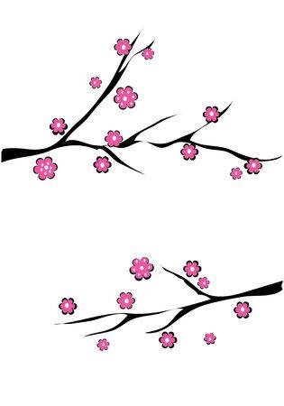 Kirschblüte Standard-Bild - 5195729