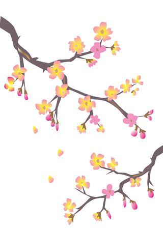 oriental vector: cherry blossom
