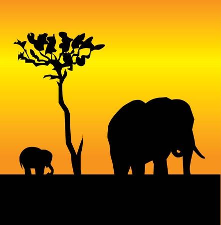 elephant and a elephant Vector