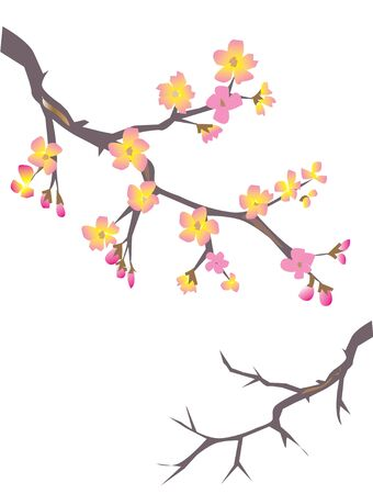cherry blossom Stock Vector - 5236547
