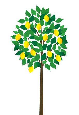 citroenboom Stock Illustratie
