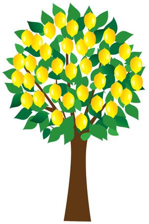 lemon tree Vettoriali