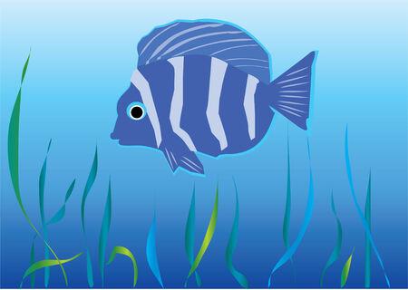 fish under water Vector