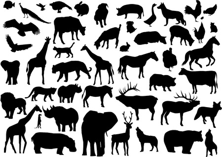 siluetas de elefantes: siluetas de animales