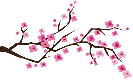 kersenboom: Cherry brunch in bloei  Stock Illustratie