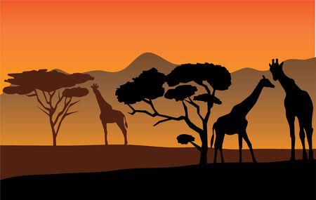 アフリカン ランドス ケープ キリン  イラスト・ベクター素材