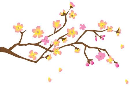 cherry brunch in blossom Stock Vector - 7287787