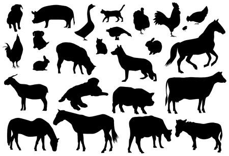 carnero: animales de granja  Vectores