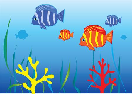 aquarium with tropical fish Vector