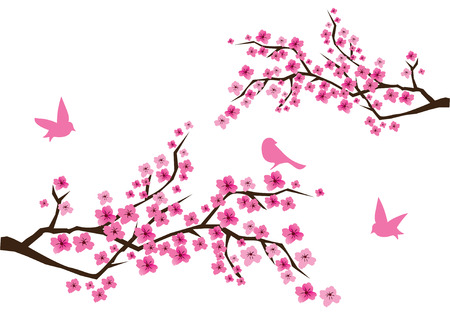 ramo di ciliegio: ciliegio in fiore con gli uccelli