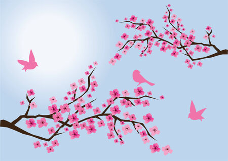 cherry branches in blossom with birds