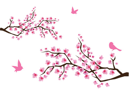 fleur cerisier: branches cerisiers en fleurs avec des oiseaux