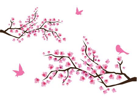 flor de cerezo: ramas cerezas en flor con aves