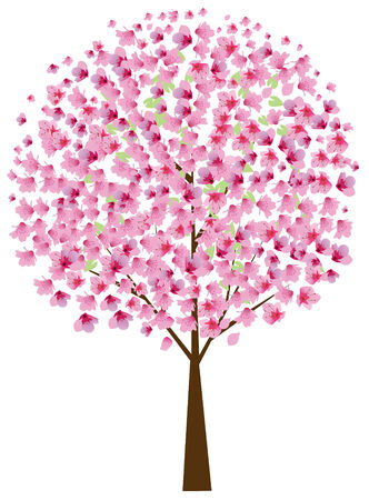 cherry tree: cherry tree in blossom Illustration