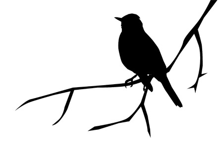 bird on branch:  silhouette of a bird on the branch Illustration