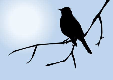 bird silhouette Stock fotó - 8497258
