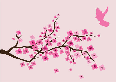 cherry branch in blossom with pink dove