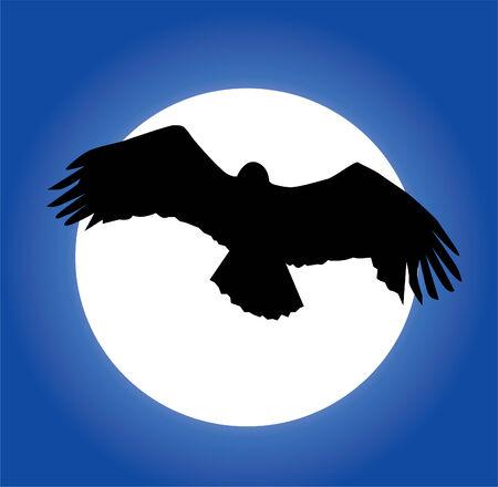 silhouette aquila: Eagle silhouette e Luna sfondo
