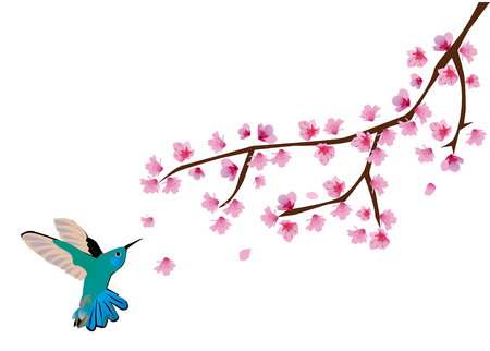 cherry blossom with humming bird Stock Vector - 8627084