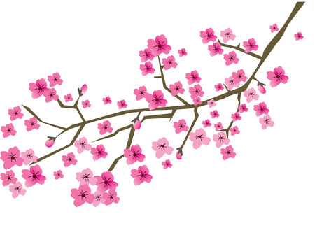 chinese script: vector plum blossom branch Illustration