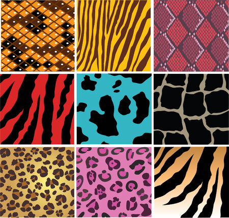 animal and snake skin Vector