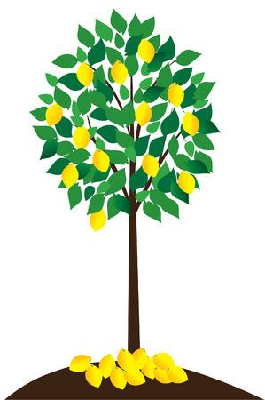 lemon tree with lemons Vettoriali