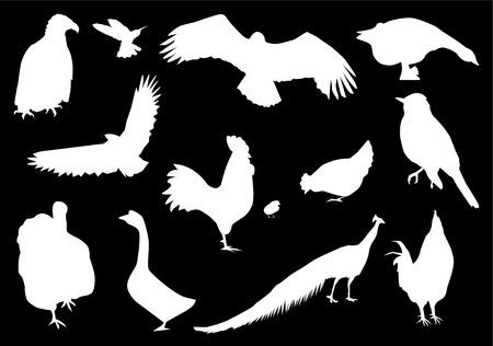 cormorant: birds silhouettes