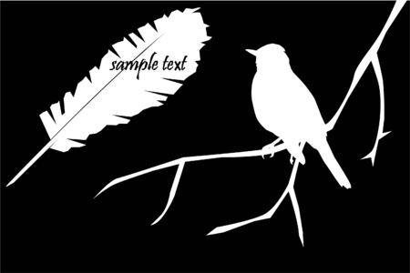 vector bird and feather Stock Vector - 9003793