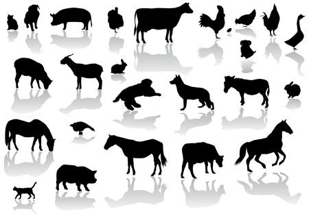 animales de granja con reflexión