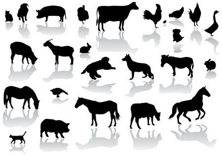 animal silhouette: farm animals with reflection