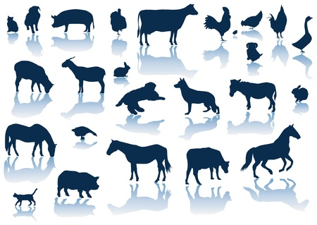 farm animals with reflection Vector