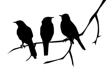 birds silhouettes on the branch